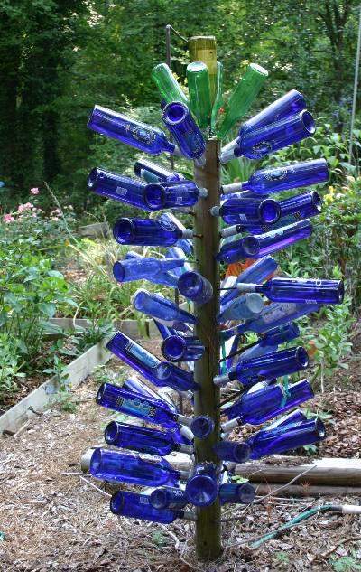 Bottle Tree Bottle Bush In Garden Walter Reeves The