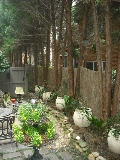 Leyland Cypress Too Close To Patio Walter Reeves The