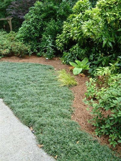 Dwarf Grasses Landscaping Mondo grass making a lawn walter reeves the georgia gardener i just like to mow because as i said i like it to look of even grass my landscape is not formal but it is tidy workwithnaturefo