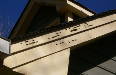 See This Description Of Carpenter Bee Life