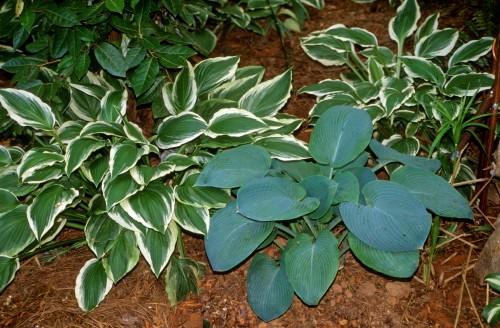 Plant Societies Locating Walter Reeves The Georgia Gardener