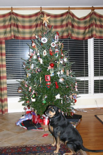 even dogs enjoy Christmas!