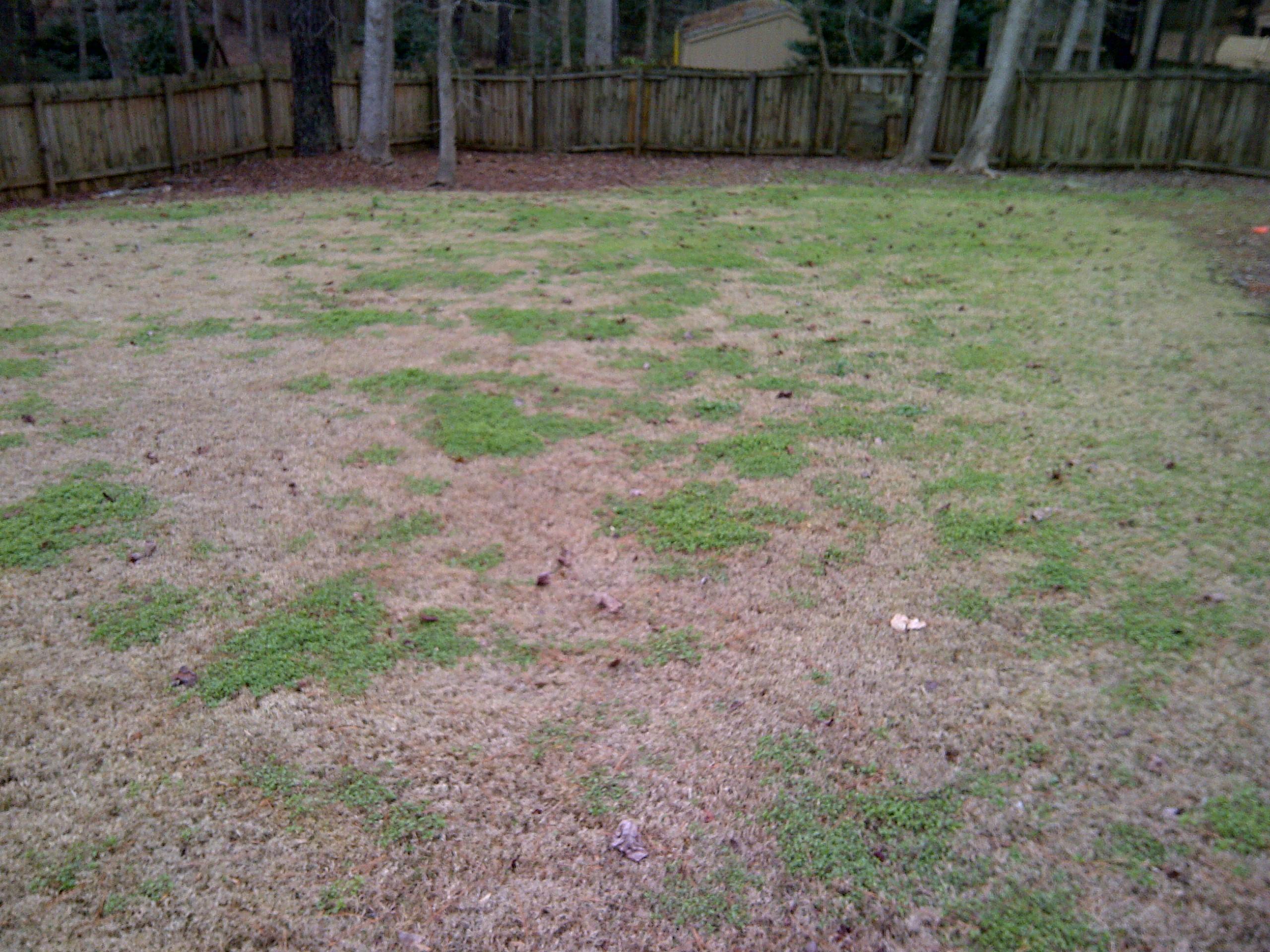 Fall Pre Emergent On Bermudagrass Lawns