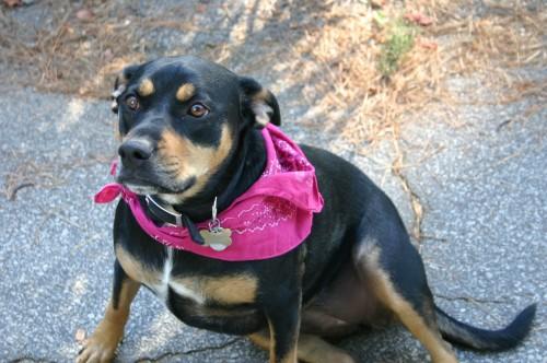 a flea-free dog
