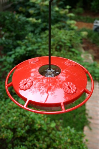 hummingbird feeder 5