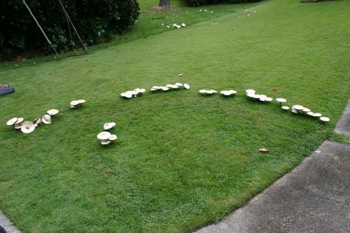 mushrooms fairy ring 1