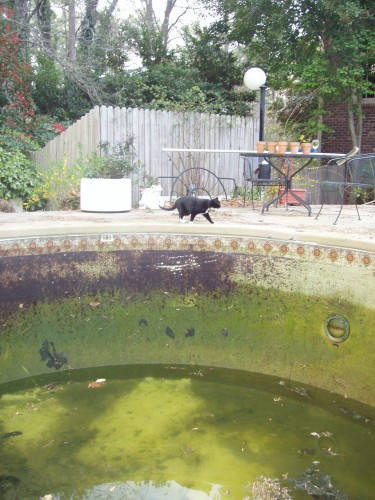 yucky pool with supervisory cat