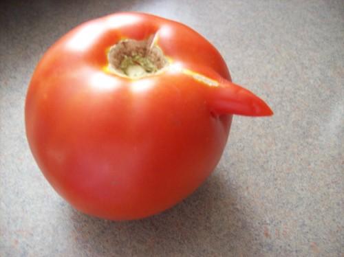 Zucchini Plant Images