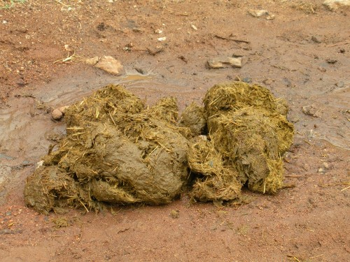 elephant dung 2