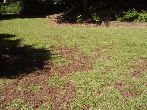 crabgrass dead in centipede