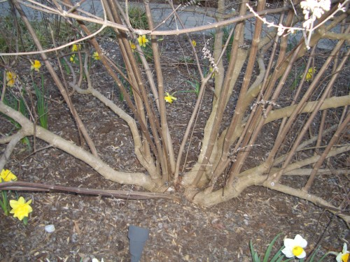 vitex for pruning