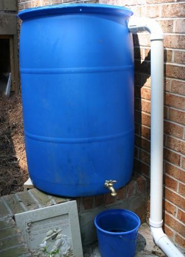 Rain Barrel Using Water In A Vegetable Garden Walter