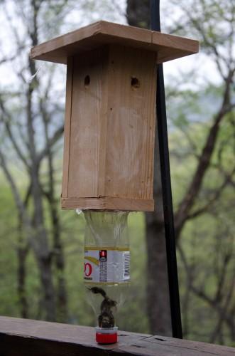 carpenter bee bee trap