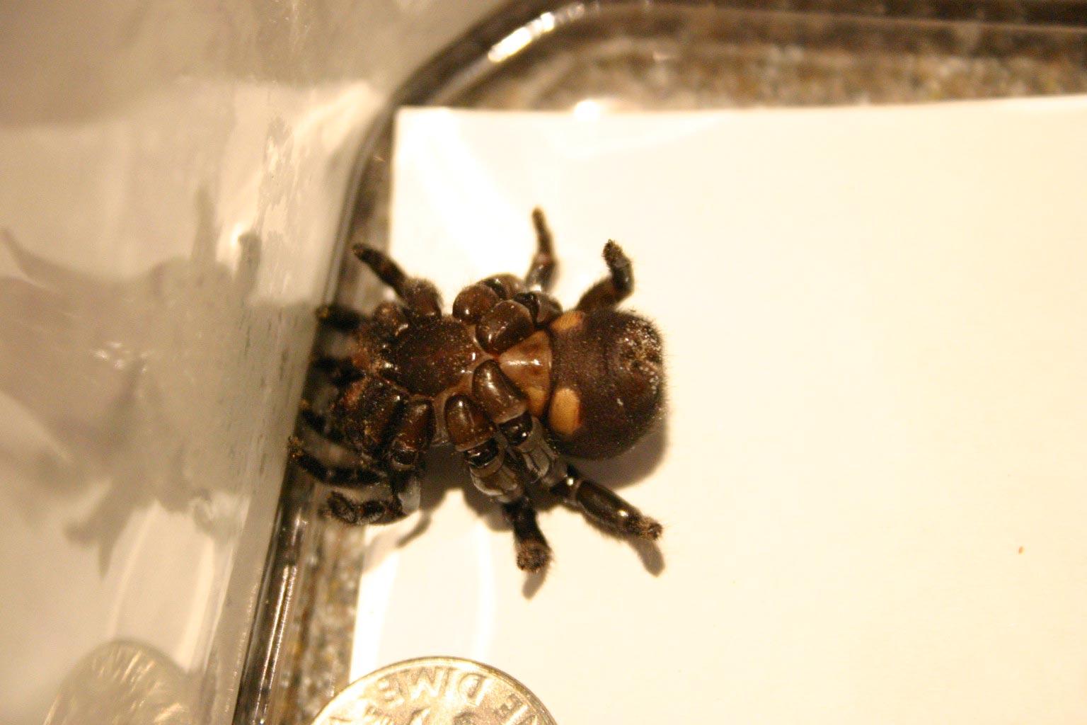 trap door spider & spider trap door 2 | Walter Reeves: The Georgia Gardener Pezcame.Com