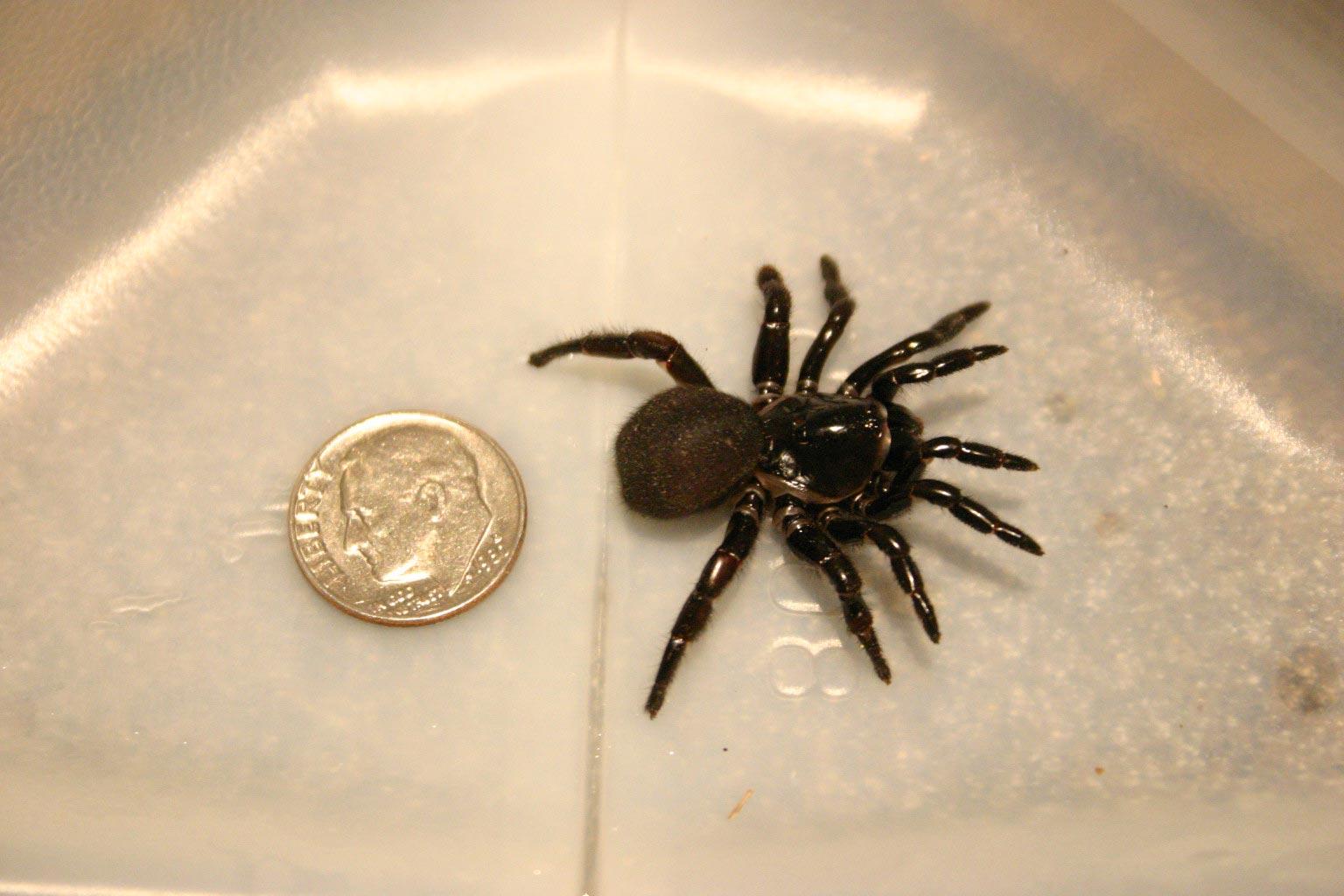 Spider Trap Door Ummidia 2 « Walter Reeves: The Georgia