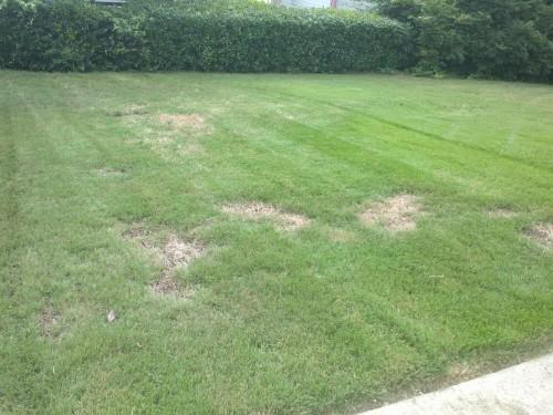 Pramitol damage to lawn