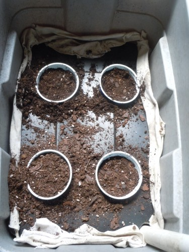 now fill each cup with potting soil
