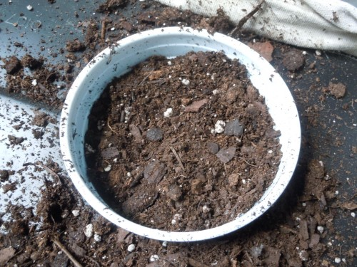 press the soil firmly into the cup; it has to be firm so the soil will wick water upwards