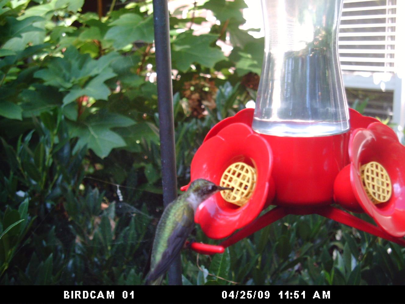 hummingbird 2 (2)