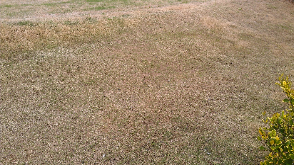 Bermuda Lawn – Thinning Due to Standing Water | Walter Reeves: The