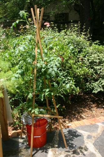 bucket tomato (2)