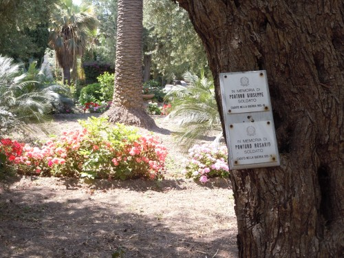aged olive trees planted as a memorial to soldiers after World War I