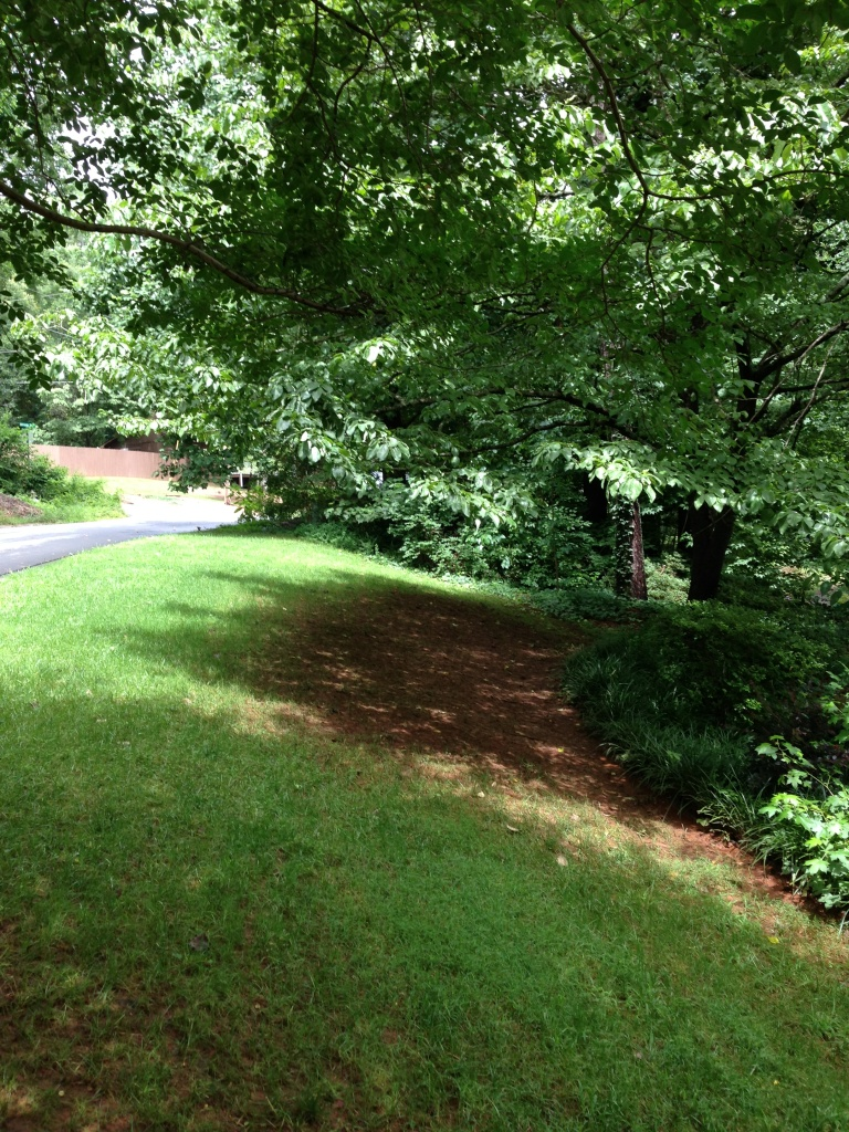 How To Plant Grass Under Oak Trees : Fescue growing under a dogwood walter reeves the georgia