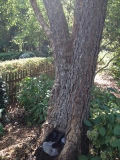 tree cavity 2
