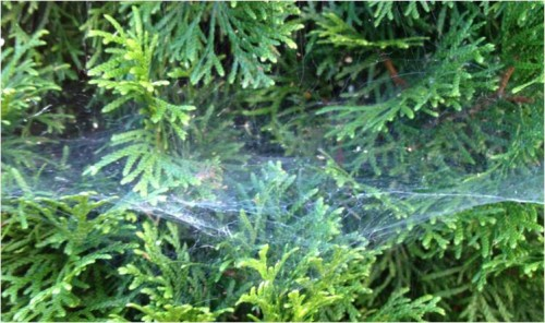 spider webs 2