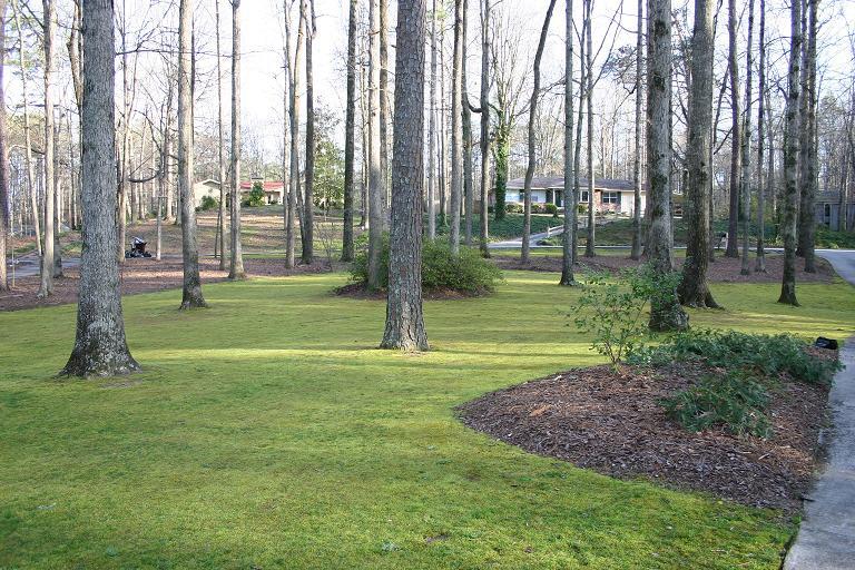 Moss Lawn BigPP