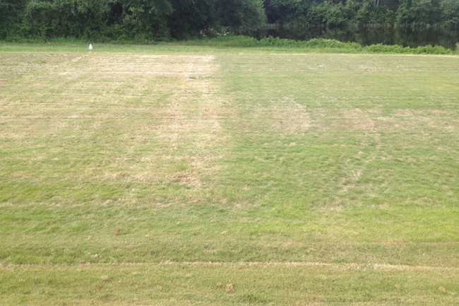 Zoysia Lawns – Slow Green-up in - 683.9KB