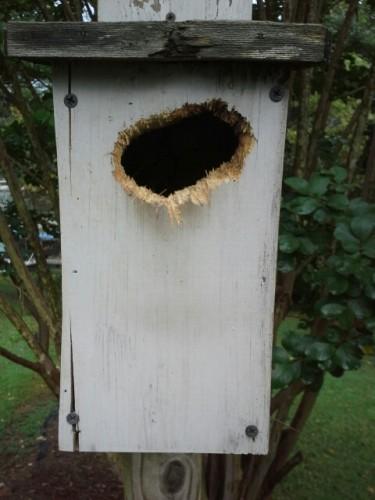 bluebird house damage
