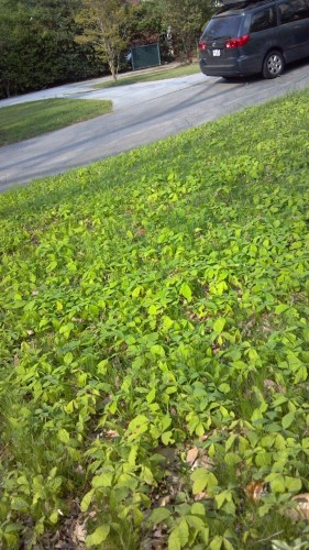 oak seedlings