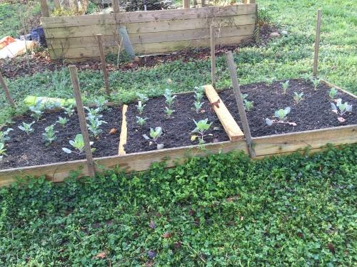 raised bed soil 1