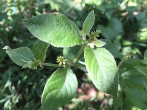 MG plant 7