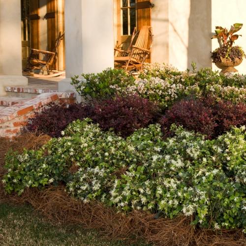 boxwood  u2013 alternative shrubs  u00ab walter reeves  the georgia gardener