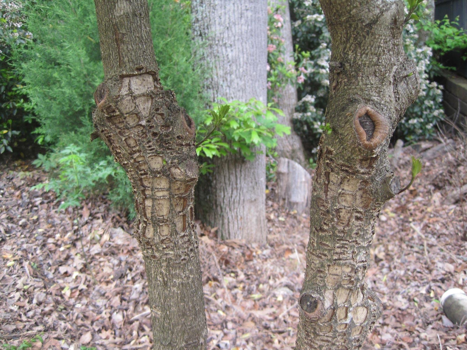 squirrel damage