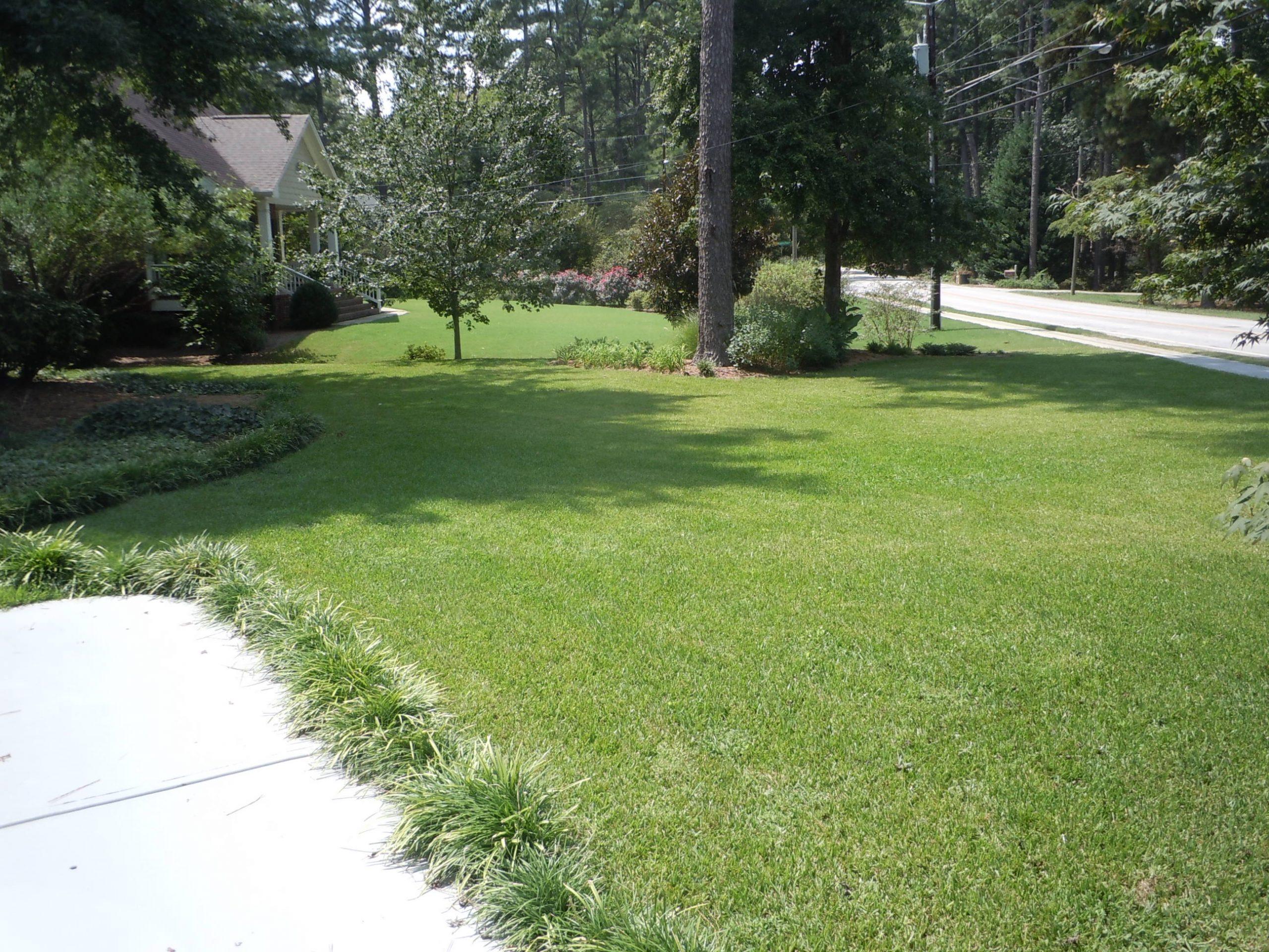 St. Augustinegrass in summer