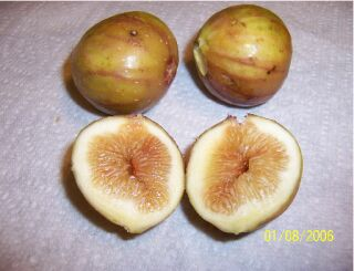 Photo of Texcas Everbearing fruit