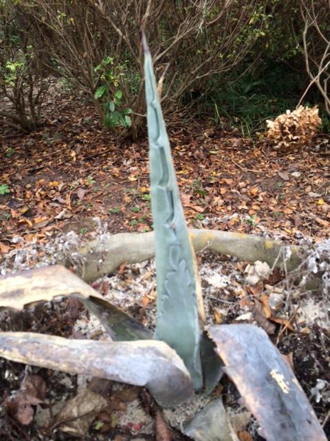 agave leaves Kelley Peace