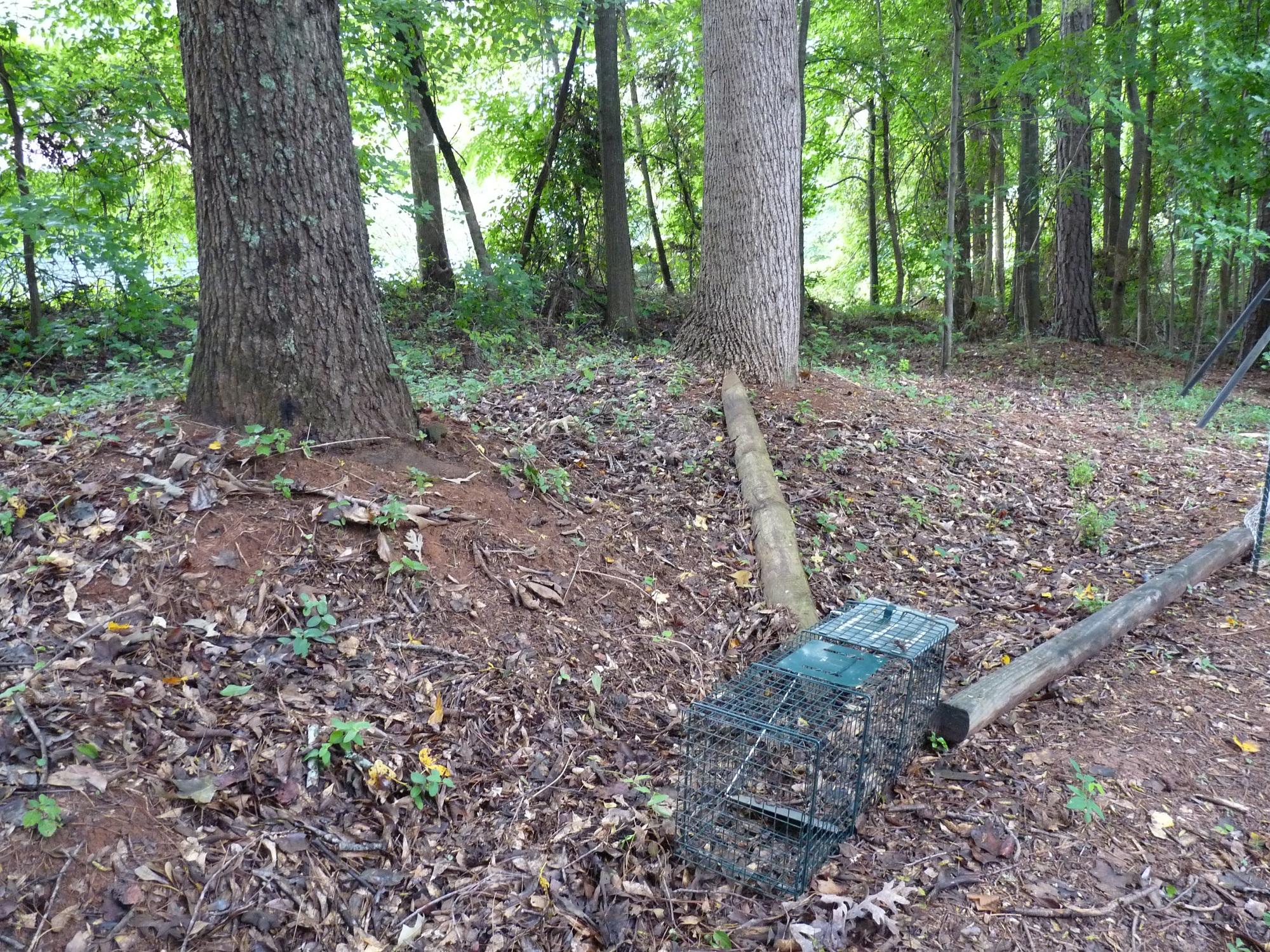 armadillo drift fence