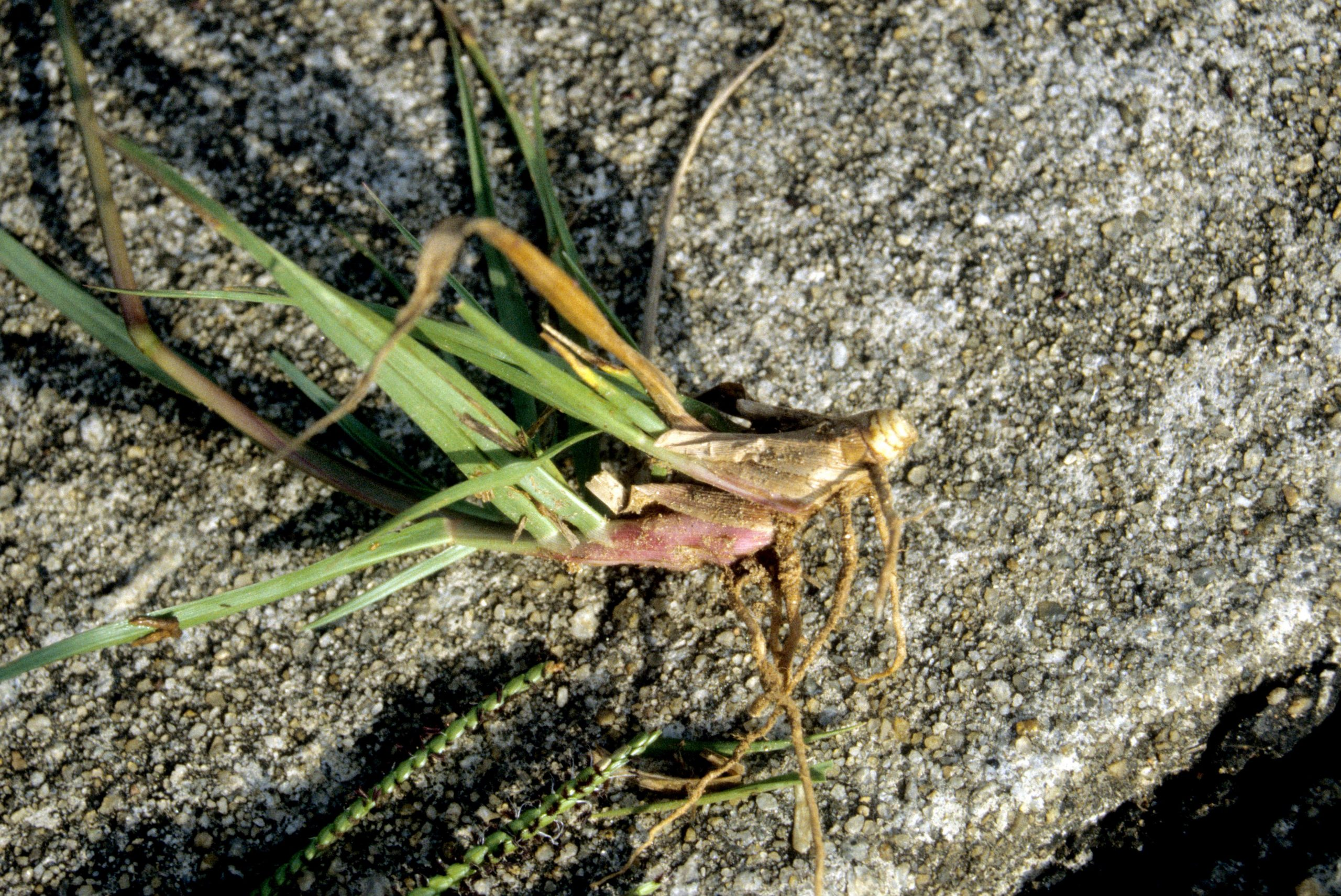 How To Get Rid Of Weeds In Bahia Grass