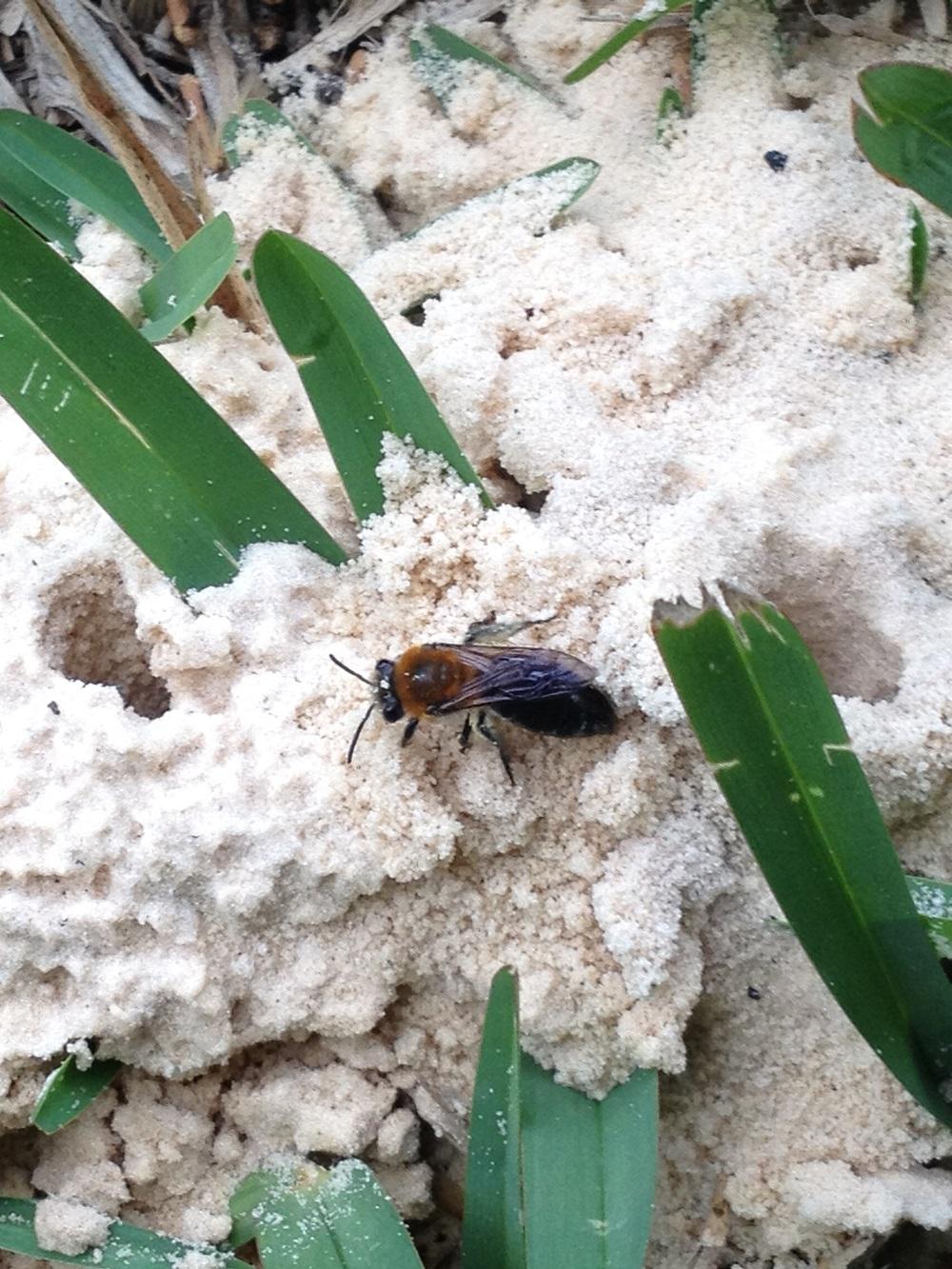 bees digger 2