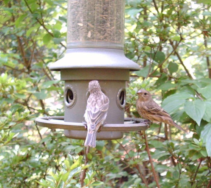 Eliminator bird feeder