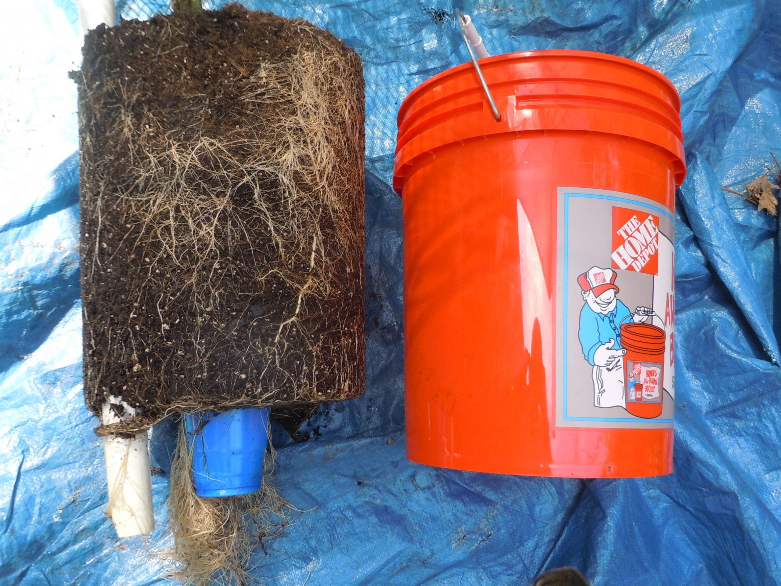 bucket garden 2