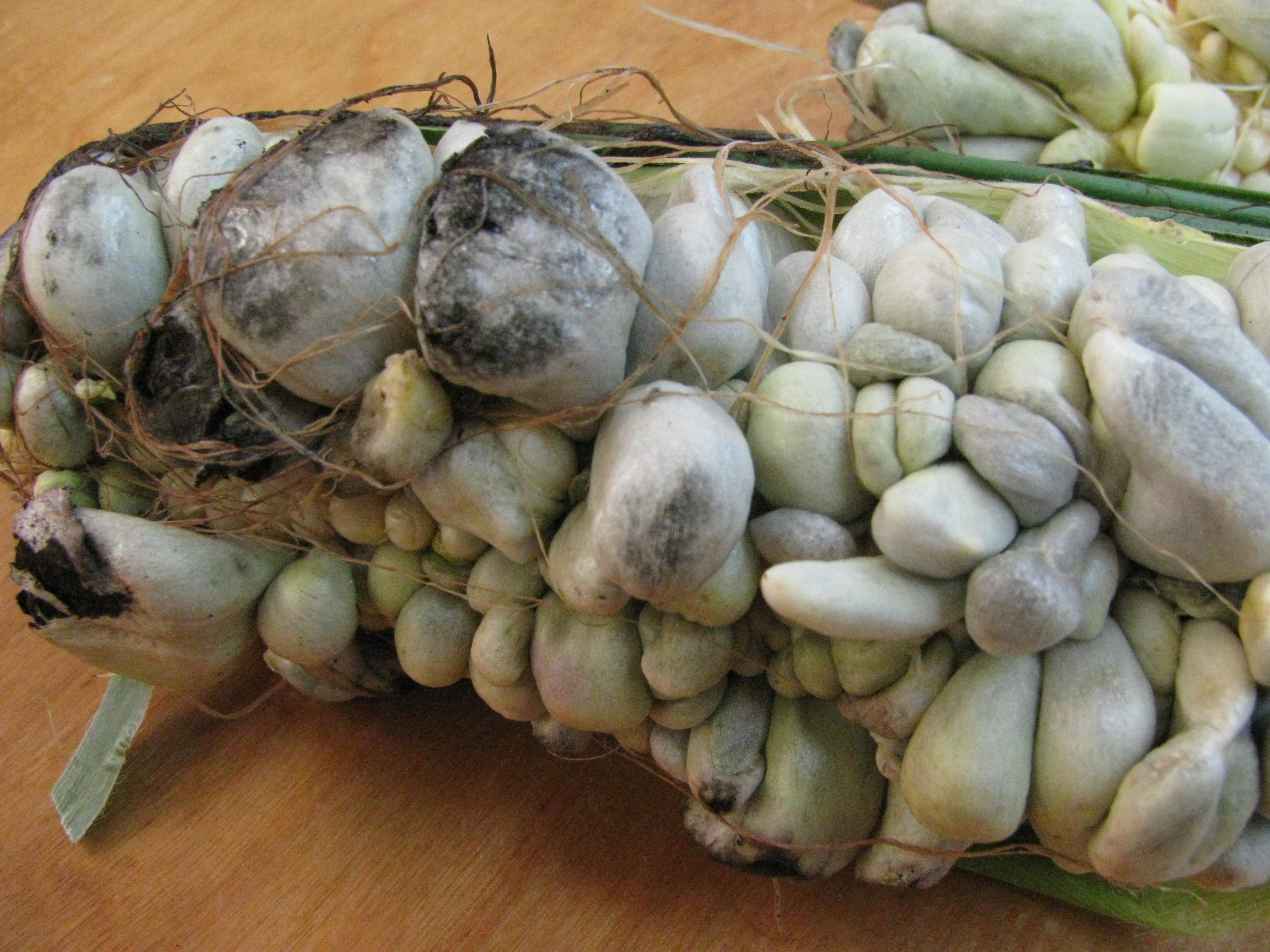 corn smut 2