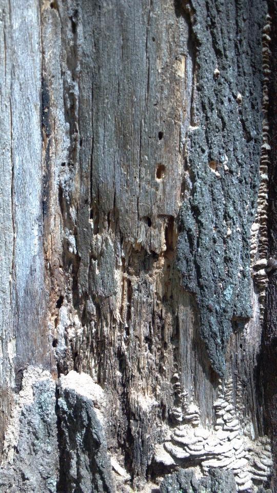 damaged tree 1 (2)