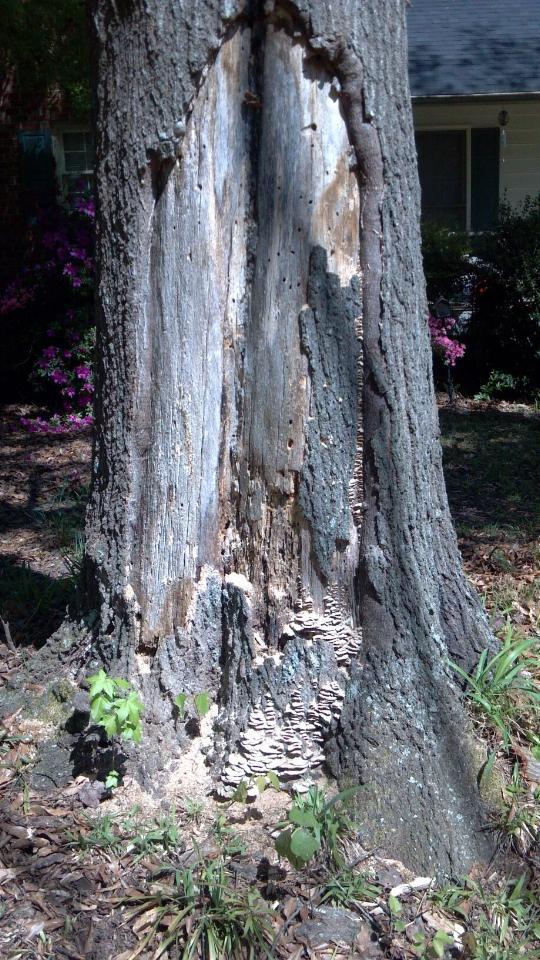damaged tree 1