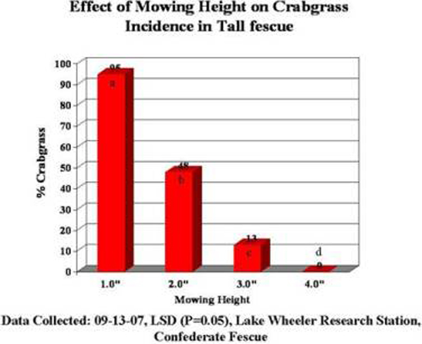 fescue mowing height