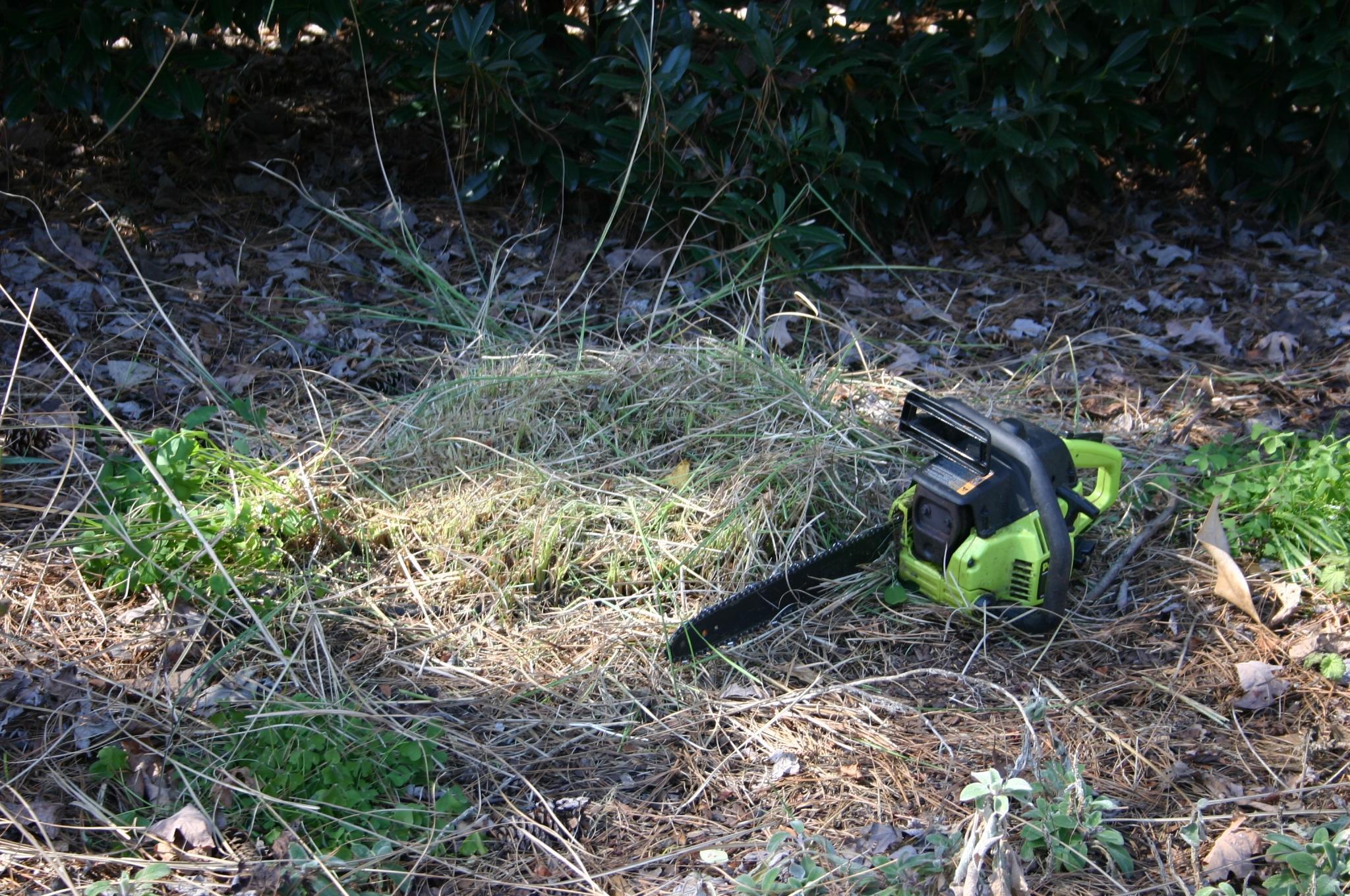 grass pruned 3